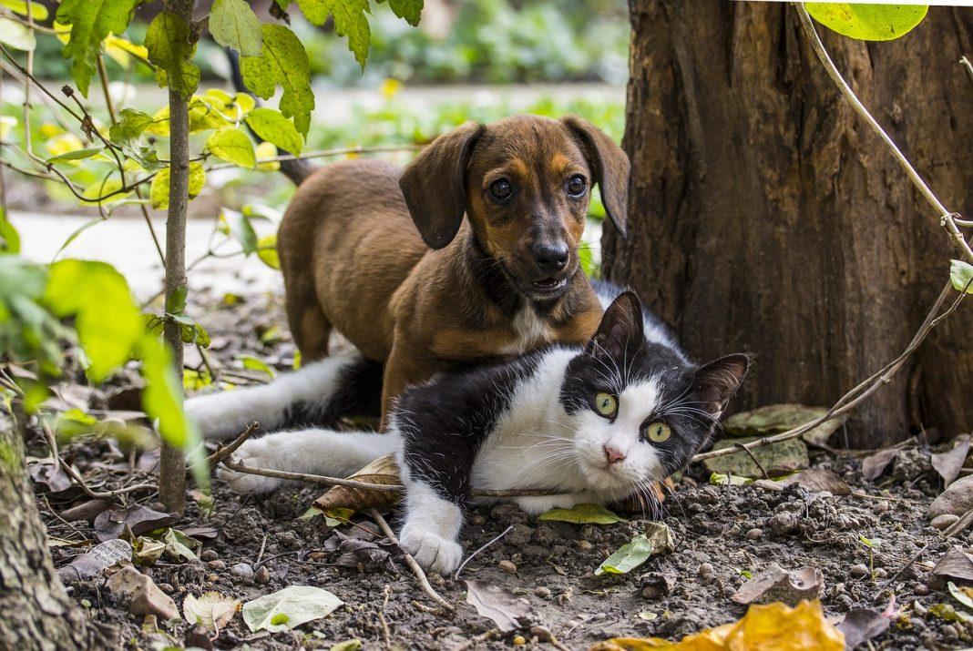 Come cane e gatto, cosa significa?