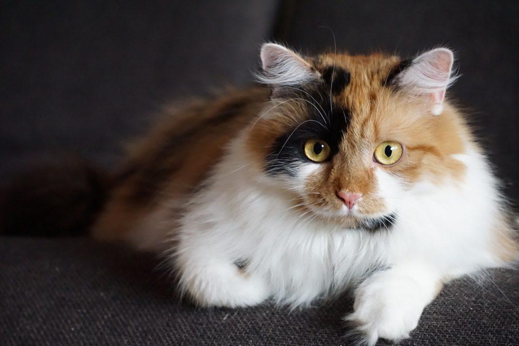Gatti e allergia: come fare?